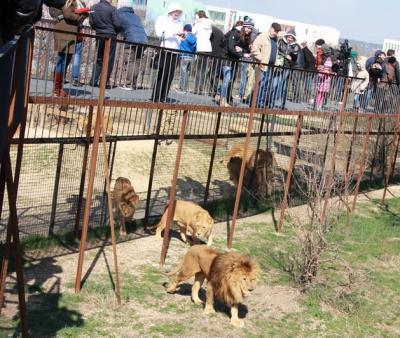 Крым. Сафари-парк Тайган (фото +видео)