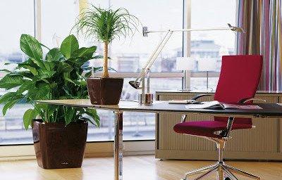 комнатные растения в офисе