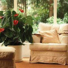 Яркие растения в интерьере